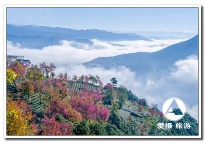 云南腾冲银杏村、无量山樱花谷摄影采风团作品欣赏及活动花絮