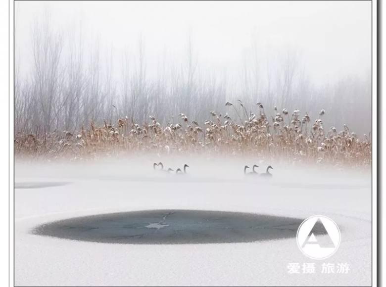 02.15-02.24 雾凇喀纳斯,冰雪天鹅湖——冬日北疆10天9晚摄影采风团(第二期)