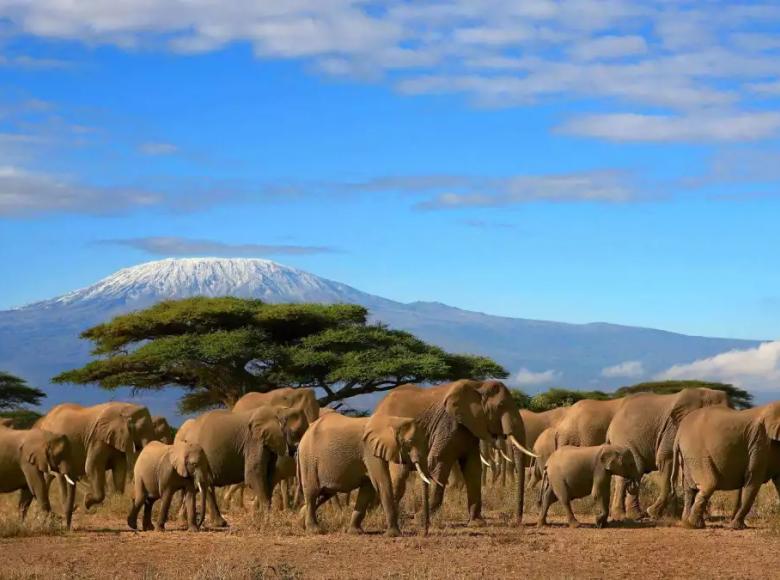 07.16—07.28 狂野非洲 13天10晚肯尼亚野生动物摄影采风团