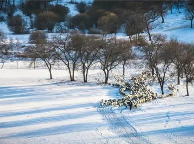 12.25-12.29冬日坝上5天4晚摄影创作团
